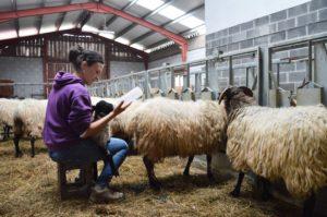 Calendario 2019 Grupo Delta en homenaje a los pastores vascos.